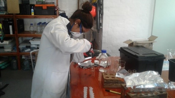 Digesting fish tissue to isolate ingested microplastic particles