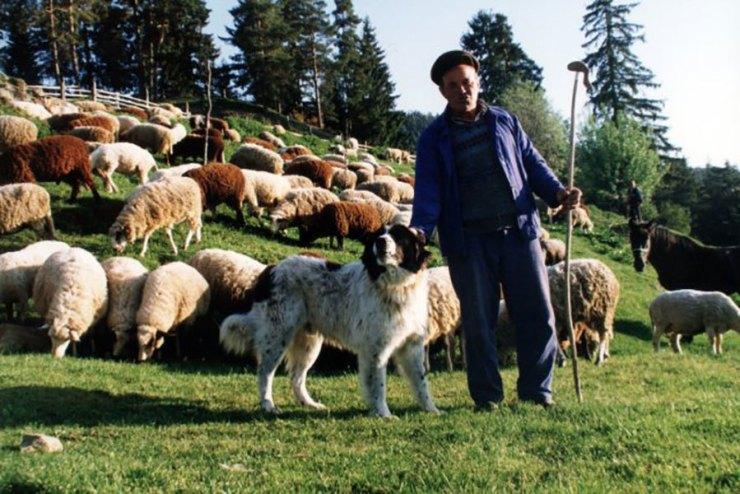 Каракачанска овчарка