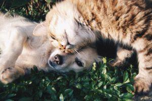 cat dog lie down