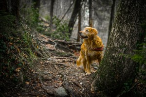 nature-dog