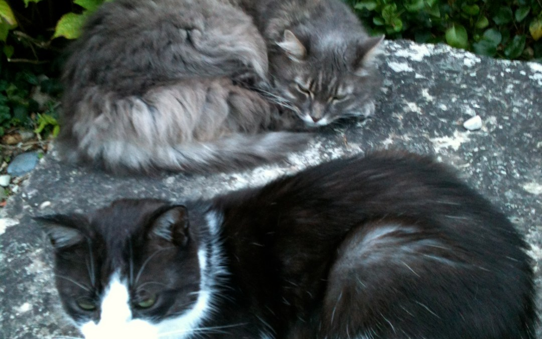 Vacances de chats…