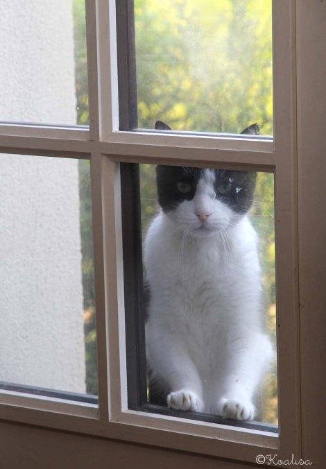 mouss window