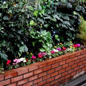 美容室花壇の植え替え