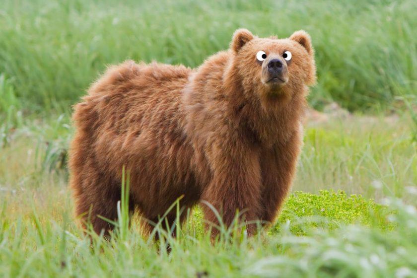 Misheard Alanis Morisette lyric: cross I bear and cross-eyed bear.