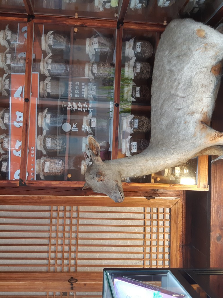 Exterior of a shop on Medicine Street in Daegu with jars in a glass display and a terrifying pair of taxidermied deer.