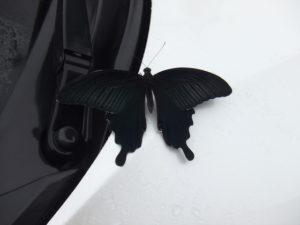 不思議な黒アゲハ