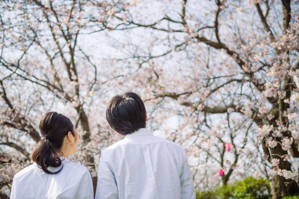 桜を見る二人の目線はこんな感じでしょうね。