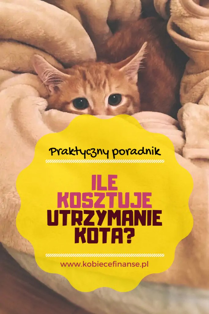 Ile kosztuje kot? Ile miesięcznie potrzeba pieniędzy na utrzymanie kota? Kobiece Finanse
