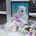 【東山動物園】オーロラさん安らかに・・・亡くなったホッキョクグマ、鳥たちへの献花台が設置されています 2017.1.14