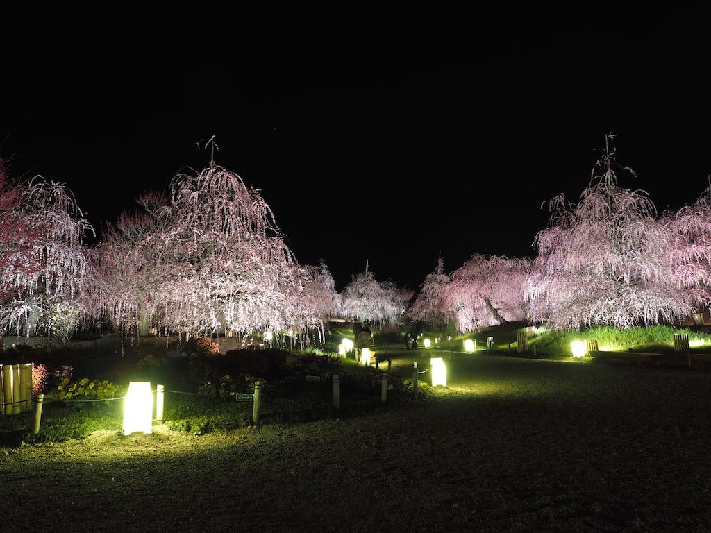 Suzuka Forest Garden