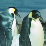【ペンギン日記】シャチだけじゃない!ペンギンも珍しい名古屋港水族館