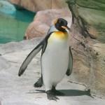 【ペンギン日記】ペンギン舎まだまだ工事中! 2018/5/20 東山動物園