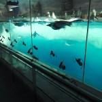【ペンギン日記】ペンギン水槽実験中! 2018/7/18 名古屋港水族館