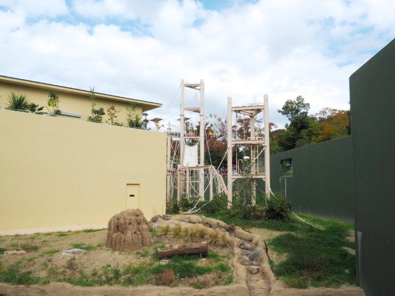 東山動物園 新ゴリラ・チンパンジー舎