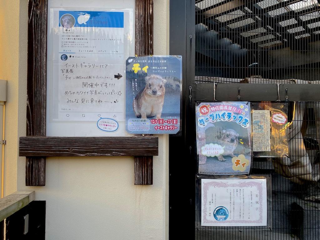 京都市動物園 ケープハイラックス