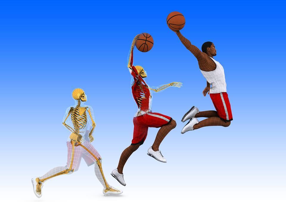 Anatomie 3D Lyon 1