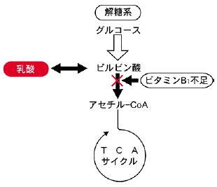 http://www.chichibu-ch.or.jp/txt/img/di_2006_07.pdf