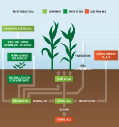 what is nitrogen loss statements the nitrogen cycle diagram [ 1500 x 1500 Pixel ]