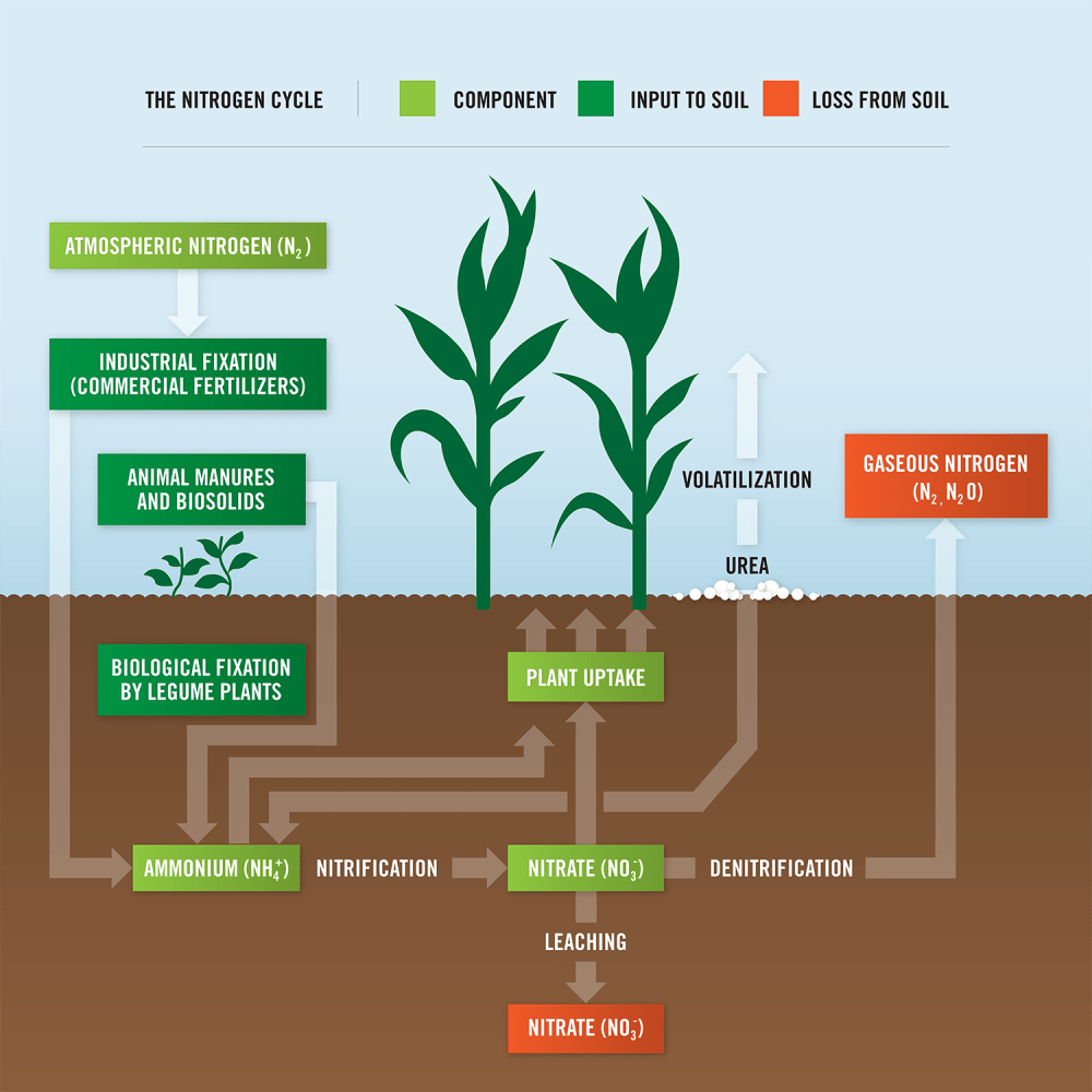 medium resolution of what is nitrogen loss statements the nitrogen cycle diagram