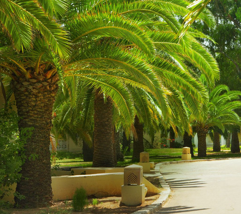 Tropik O'simliklar va Kaktuslar
