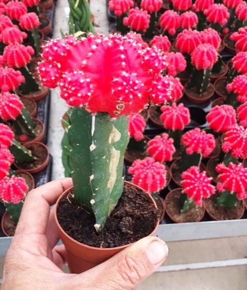 Cactus-Succulent-