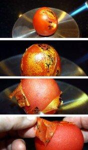tomaten-enthaeuten