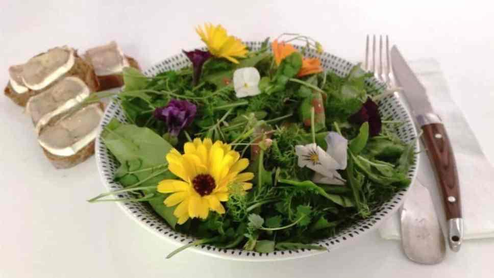Wildkräuter Salat mit Ziegenkäse