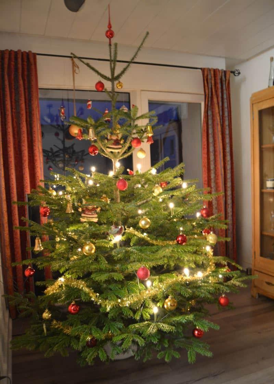 Tannenbaum weihnachtsgruß-kochen-aus-liebe