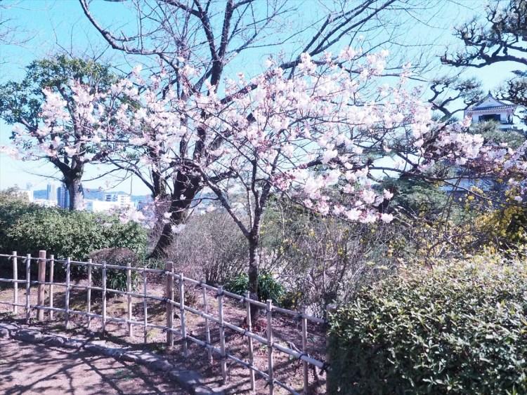 そろそろ桜の季節なので県内のお花見スポットをまとめてみた