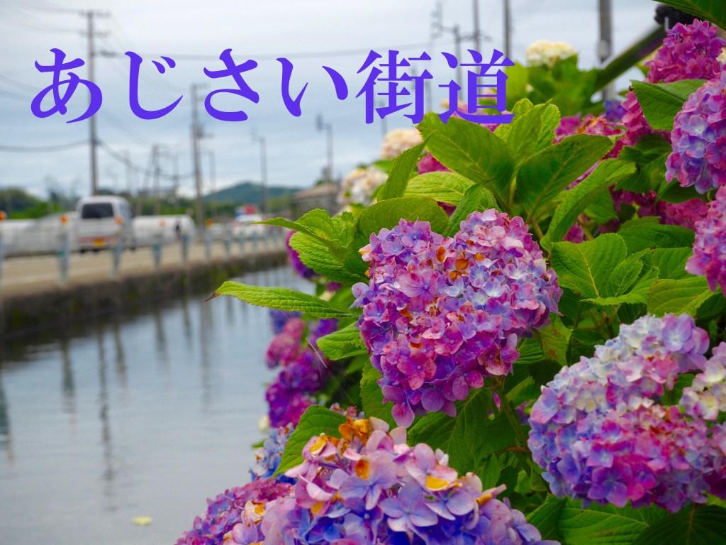 6月の上旬~中旬が見頃「あじさい街道」に行ってきたよ!