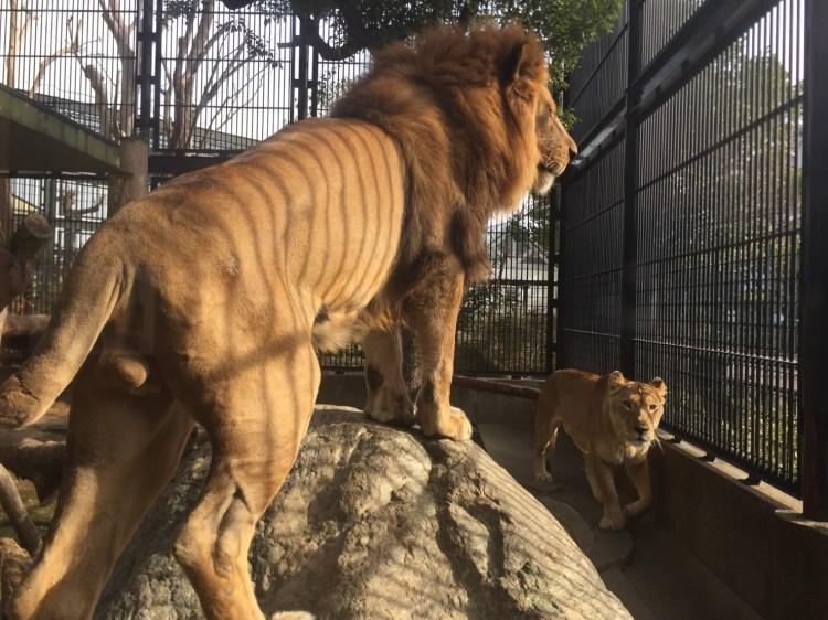 入場無料の動物園テーマパーク「わんぱーくこうち」に行ってきた!無料でサーバルちゃんに会おう!
