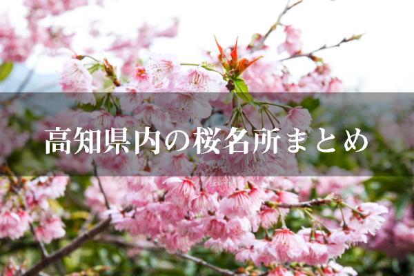 【桜の名所】今年はどこ行く?高知県内のお花見スポット26ケ所をまとめて紹介!