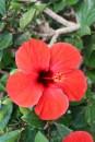 Blumen sind leider eher selten auf Gran Canaria.