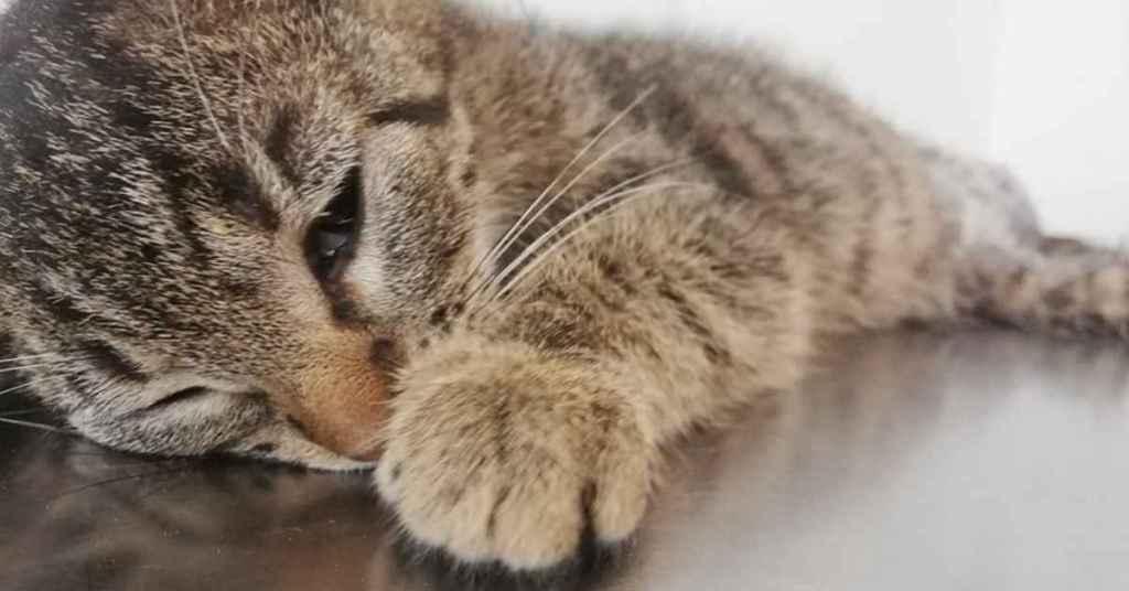 Mały kotek bezdomny.