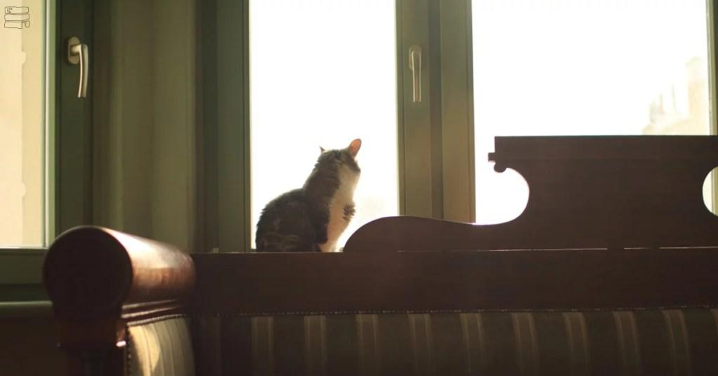 Kot siedzi na oknie i patrzy na ulicę