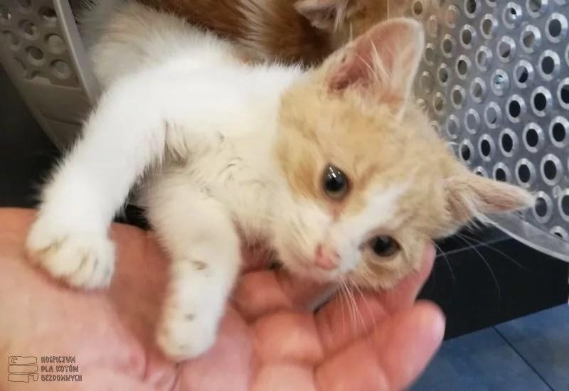 Mały kotek Feluś