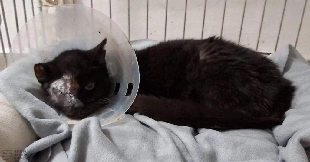Kotka Magaja po usunięciu gałki ocznej