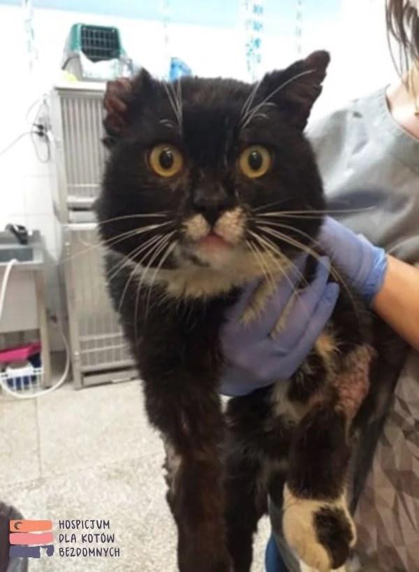 Kot Legins trzymany na rękach przez opiekunkę w lecznicy weterynaryjnej, na lewej przedniej łapce rzoległa rana wymagająca plastyki.