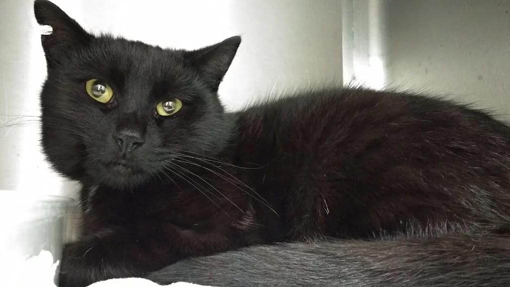 Czarna kotka Kofi w lecznicy weterynaryjnej