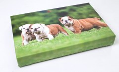 Canvas Print of Puppies