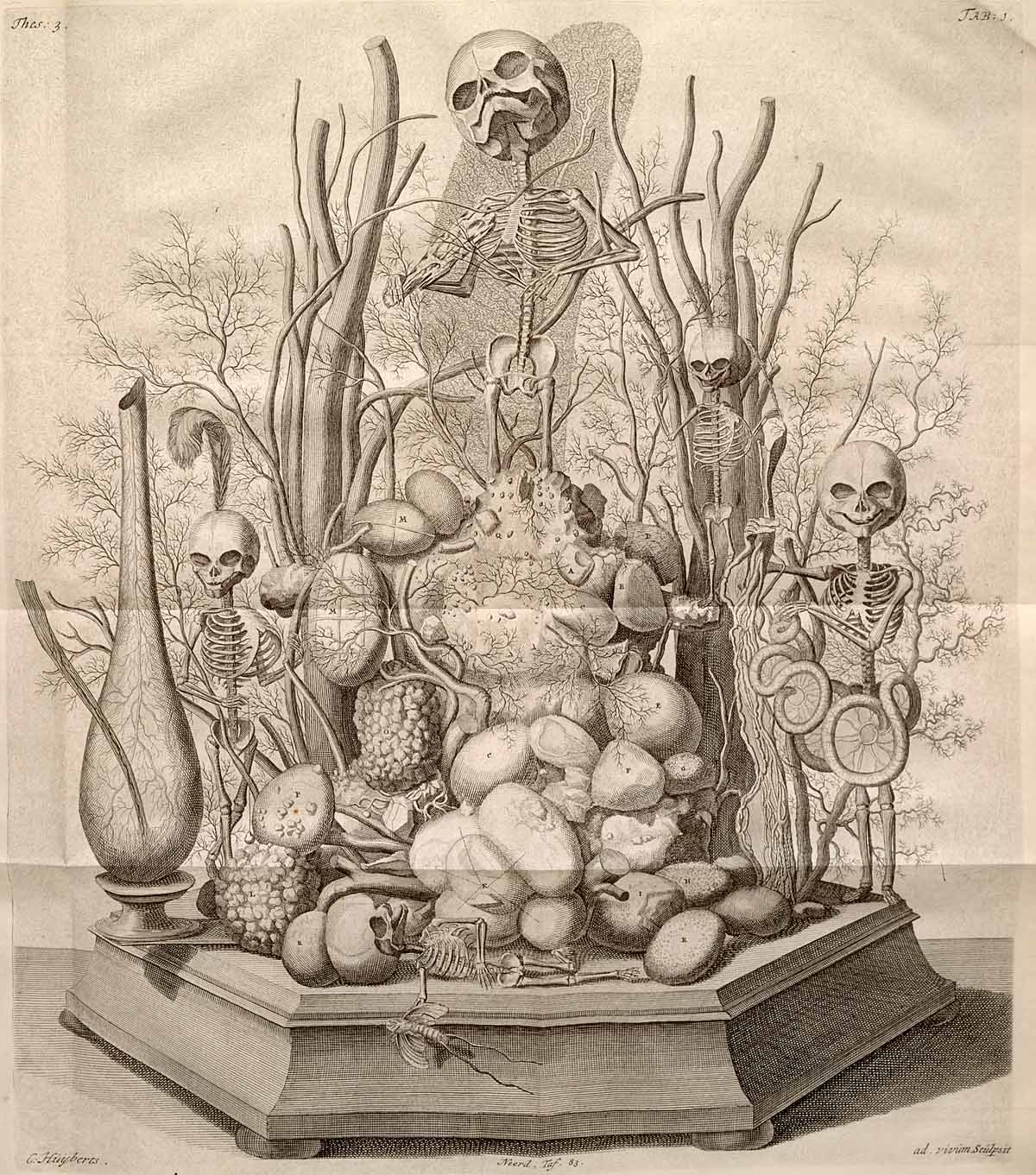The strange marriage of art and science in Frederik Ruysch's anatomical dioramas. Credit: Zymoglyphic Museum.