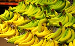 The Journey of one Banana: A Supply Chain in Motion.