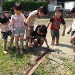 【保育】田んぼで泥あそび