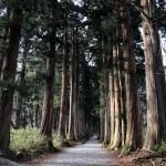 戸隠神社並木道