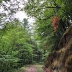 梅雨の林道