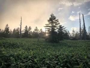 霧の志賀高原