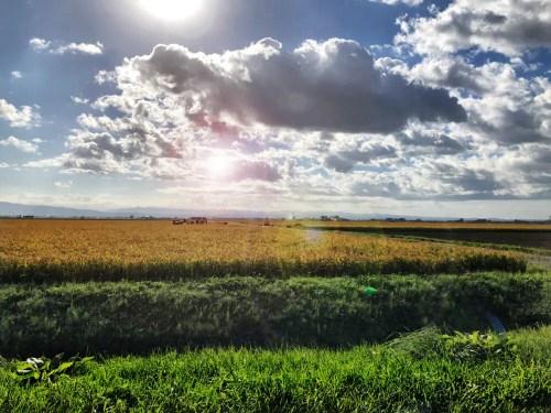 北海道草原