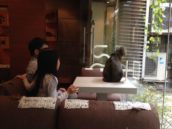 台湾猫カフェ『極簡』