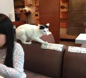 極簡の猫ちゃん