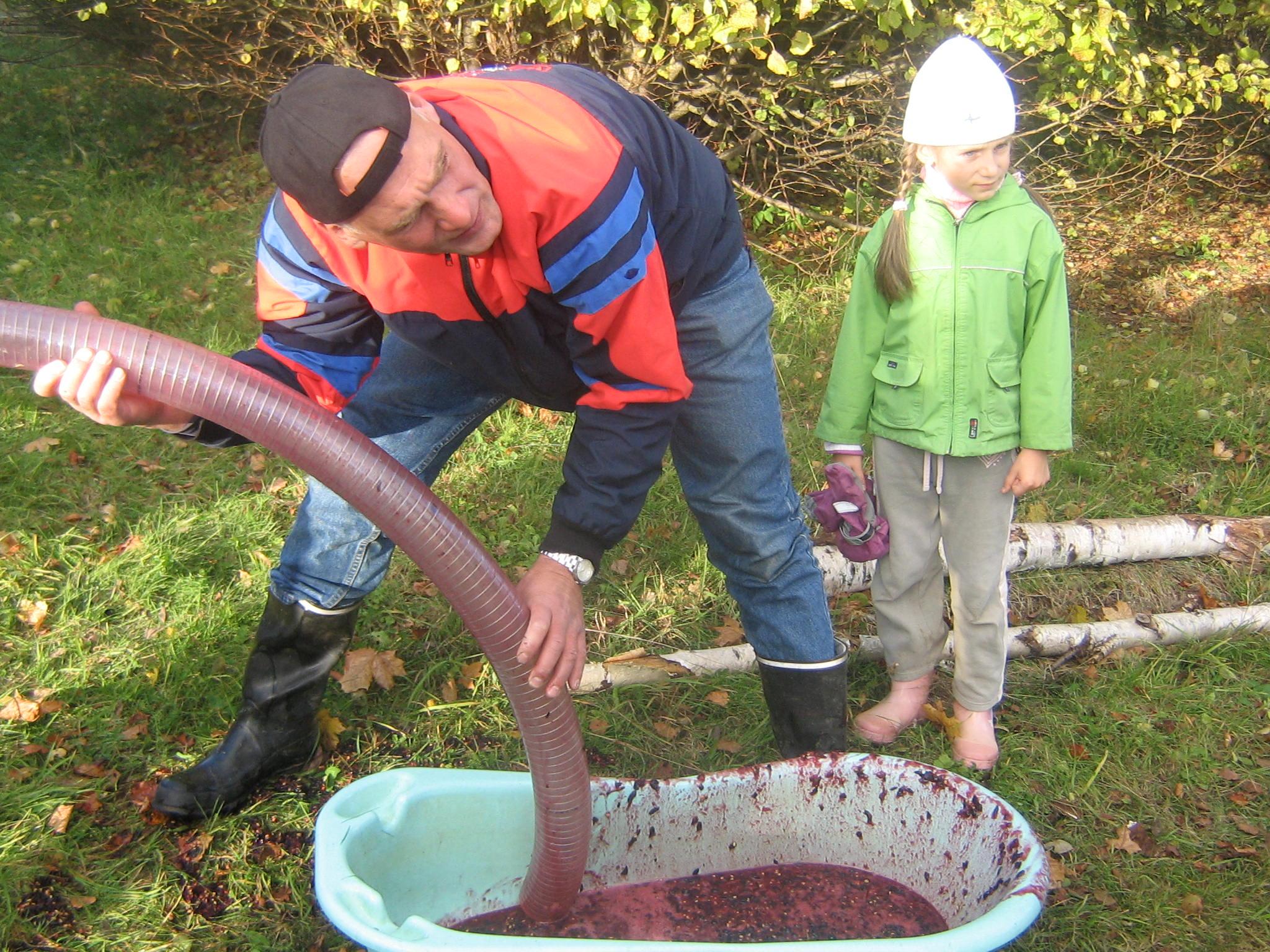 Jaak Eensalu askeldamas uue viinamarjapurustajaga